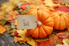 Fall Thanksgiving Background. With leaves Stock Images