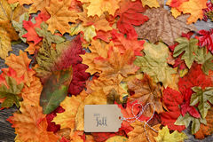 Fall Thanksgiving Background. With leaves Stock Photo