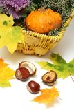 Fall-Thanksgiving decorations Stock Photos