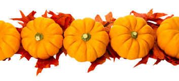 Fall Thanksgiving Hal decoration isolated on white Royalty Free Stock Photos