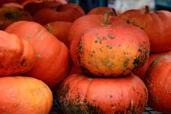 Halloween and Thanksgiving Pumpkins market large pile of orange pumpkin decoration pumpkin picking conceptual autumn photography. Fall and Thanksgiving Halloween stock images