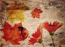 Fall Theme  Background Stock Photos