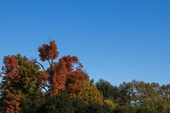 Fall theme background -Bright multi-colored autumn trees against a very blue sky - room for copy stock image