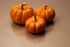 Fall - Three Pumpkins Royalty Free Stock Image