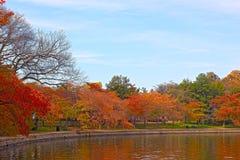 Fall at Tidal Basin, Washington DC. Royalty Free Stock Images