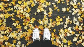 Fall time fashion Royalty Free Stock Image