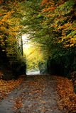 Fall time in forest Stock Photography