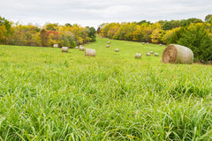 Fall Time Hay Field Stock Images