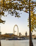 Fall time of maple tree and london eye view from the other side or river. Thames stock photos