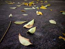 fall to floor Royalty Free Stock Photos