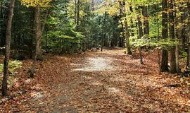 Fall Trail. Trail through the woods in the fall Stock Photo