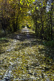 Fall on the trail Royalty Free Stock Photos