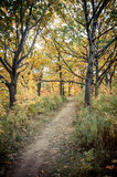 Fall Trail. A trail cutting through the changing colors of a fall forest Royalty Free Stock Photo