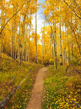 A fall trail Royalty Free Stock Photo