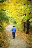 Fall trail royalty free stock photo