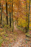 Fall on the Trail. A shot of the colors of fall on the trail Stock Photography