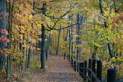 Fall Trail Stock Images