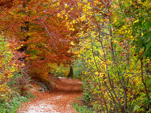 Fall Trail Scenic. Fallen leaves line a trail into woods.  Woodland scenic, tranquil setting Stock Photo