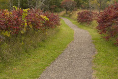 Fall Trail Scenic Stock Photography