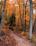 A fall trail walk. This is a beautiful walk in the park during fall. Shot was taken in Gatineau, Quebec, Canada stock images