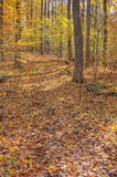 Fall Trail in the Woods Royalty Free Stock Photography