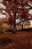 Fall tree. Leaves and fall tree at Garret Mountain Park royalty free stock images