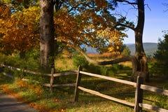Fall Tree Royalty Free Stock Photography