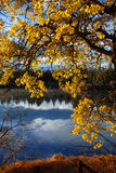 Fall tree. Tree in fall on a lake royalty free stock photos