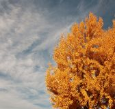 Fall Tree. Against the blue sky with clouds Stock Photos