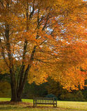Fall tree and bench Stock Image