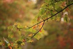 Fall tree branch Stock Image