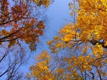 Fall tree crowns royalty free stock photo