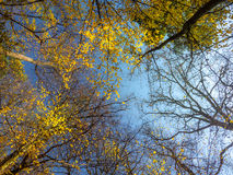 Fall tree crowns Stock Photos