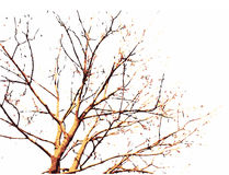 Fall Tree Illustration. A scalable vector illustration of a tree in the fall Royalty Free Stock Images