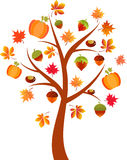 Fall Tree Illustration, Acorn Tree Royalty Free Stock Photos