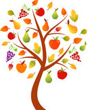 Fall Tree Illustration, Apple Tree, Orchard Tree. Fall orchard apple and pears tree with grape and corn, red apples, yellow apples, fall leaves, yellow leaves Royalty Free Stock Photos