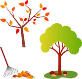 Fall Tree Illustration, Green Tree. Green tree illustration and fall tree with autumn leaves, yellow leaves, red leaves, orange leaves, foliage, falling leaves Royalty Free Stock Image