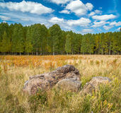 Fall tree landscapes Royalty Free Stock Image