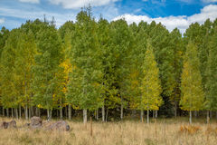 Fall tree landscapes Stock Photo