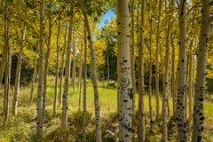 Fall tree landscapes Royalty Free Stock Photos