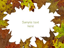 Fall tree leaf background. With space for text Royalty Free Stock Images