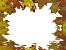 Fall tree leaf background. With space for text Royalty Free Stock Photography