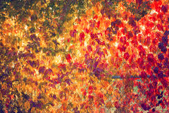 Fall tree leafs background. Colorful fall tree leafs background Royalty Free Stock Image