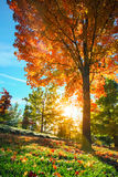 Fall tree leafs background. Colorful fall tree leafs on grass in morning sunlight background Royalty Free Stock Photography