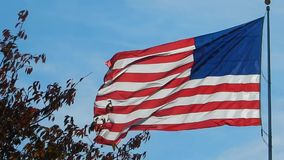 Fall Tree Leaves around waving American Freedom Flag stock video