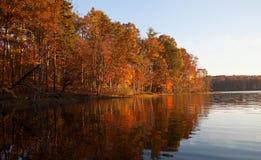 Fall treeline Lizenzfreie Stockfotos