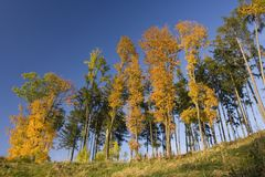 Fall trees. A group of colored trees in a sunny fall day Stock Image