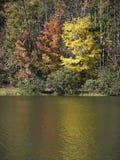 Fall Trees. By a lake in South Carolina stock photo