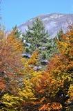 Fall trees royalty free stock photography