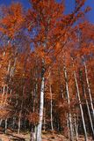 Fall trees Stock Photography